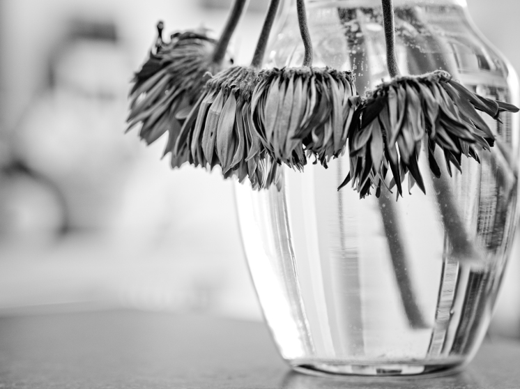 Black and white photo of a vase of dead flowers