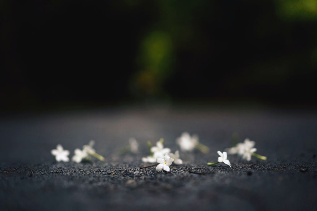 White flowers on a road
