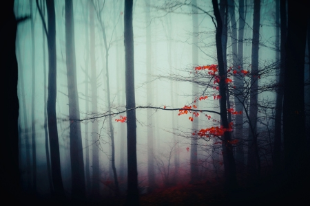 A forest in fog
