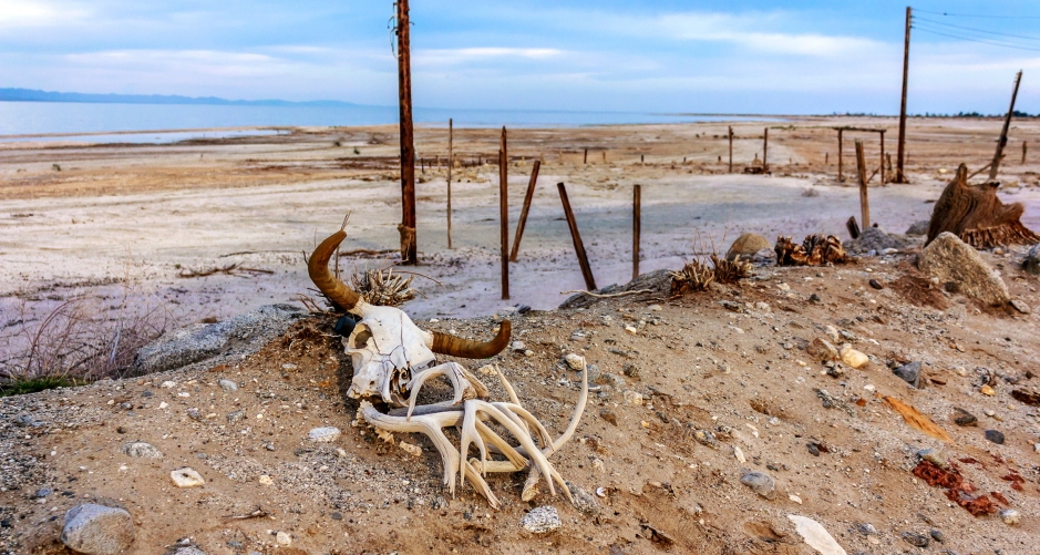 cow skull and deer antlers by the shore of the Sultan Sea in California.