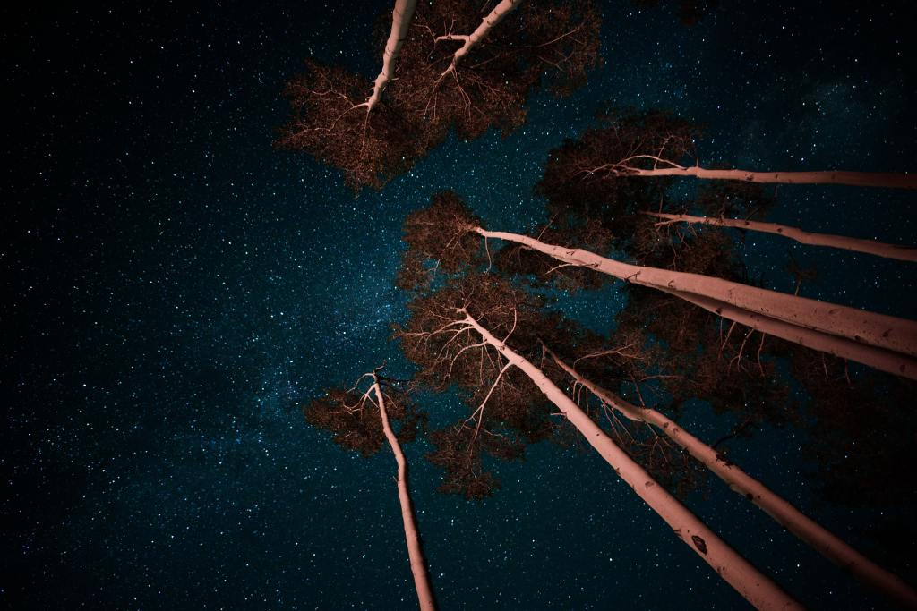A forest at night, looking up into the stars.